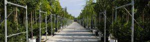 Produzione alberi in vaso e plantinbag