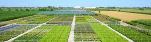 Produzione arbusti in vaso