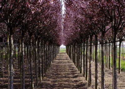 alberi in piena terra
