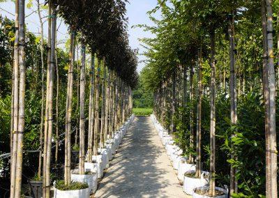alberi in vaso 4