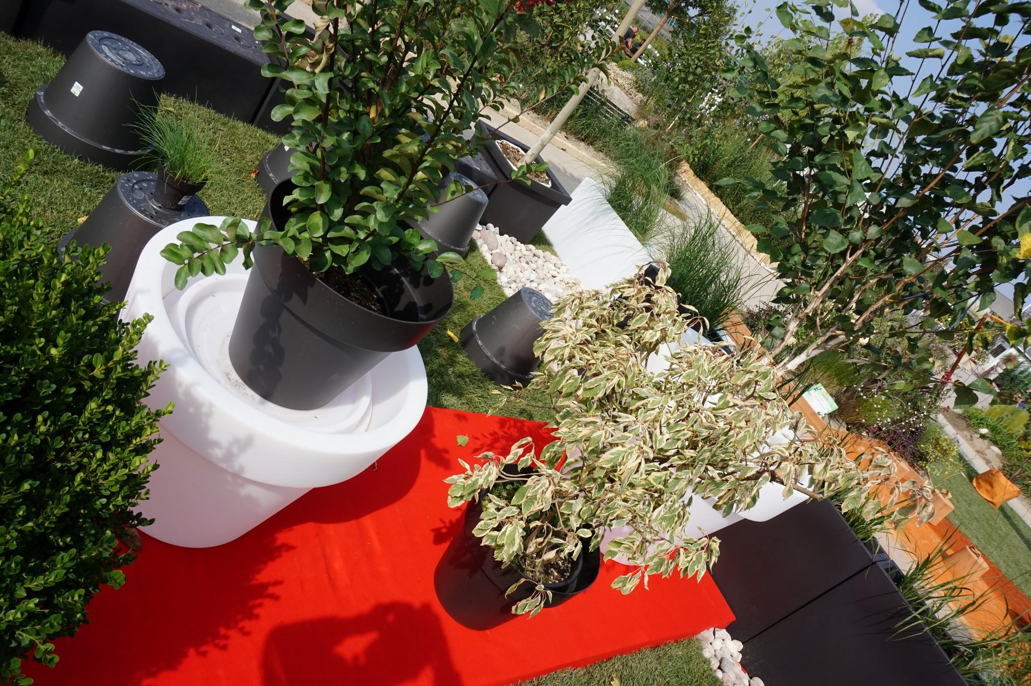Concorso giardini Verdeggiando_101 Fashion Green Parade (7GKW3) DM Landscape Marica Succi e Domenico Dipinto