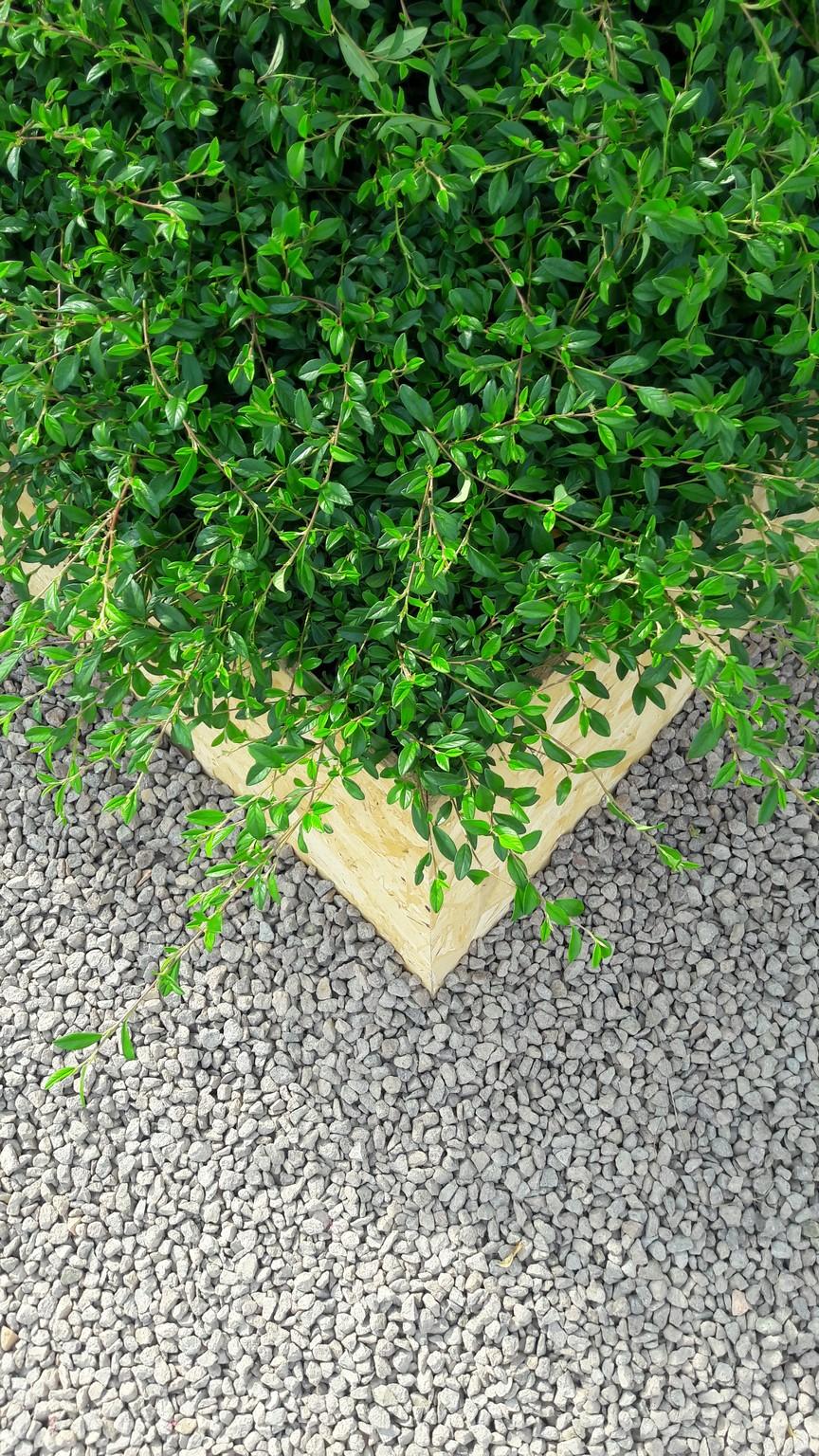 Concorso giardini Verdeggiando_111 Ode al giorno felice (ON78V) Ida Lia Russo