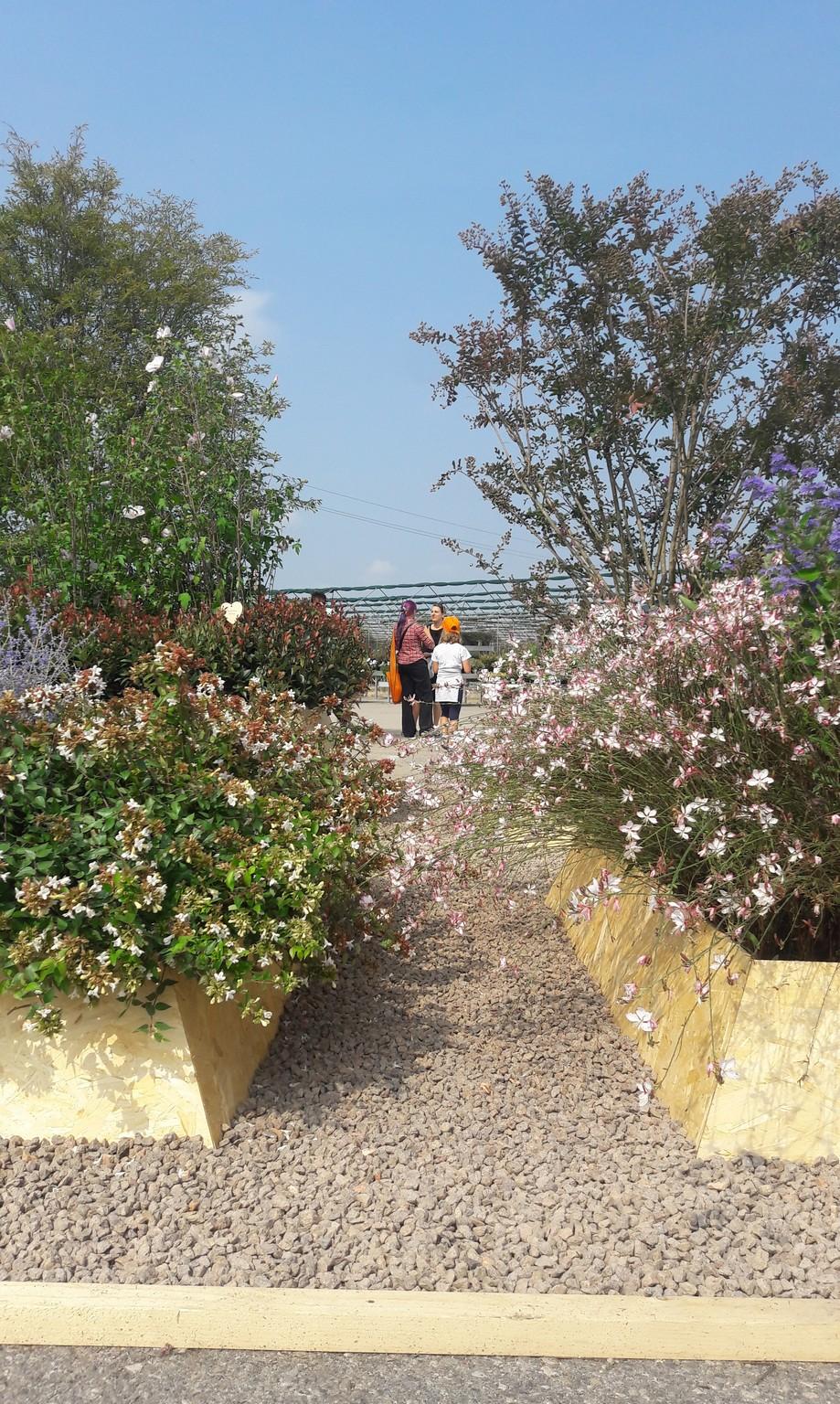Concorso giardini Verdeggiando_123 Ode al giorno felice (ON78V) Ida Lia Russo