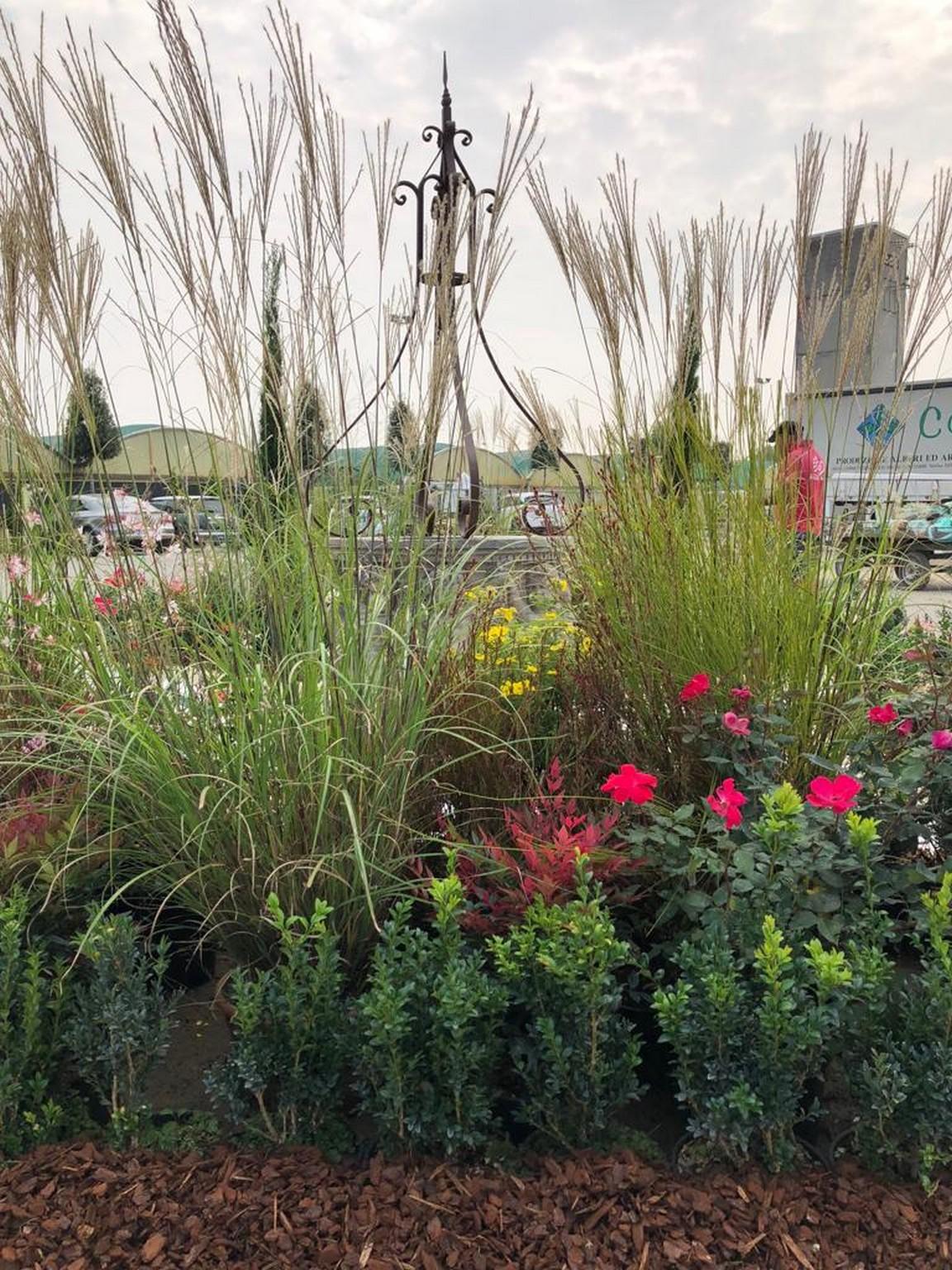 Concorso giardini Verdeggiando_155 Incontro (3539V) Rosanna De Florio