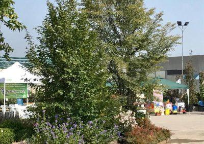 Concorso giardini Verdeggiando_164