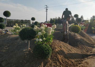 Concorso giardini Verdeggiando_18 In Onda (D79LE) D'Errico Loreta