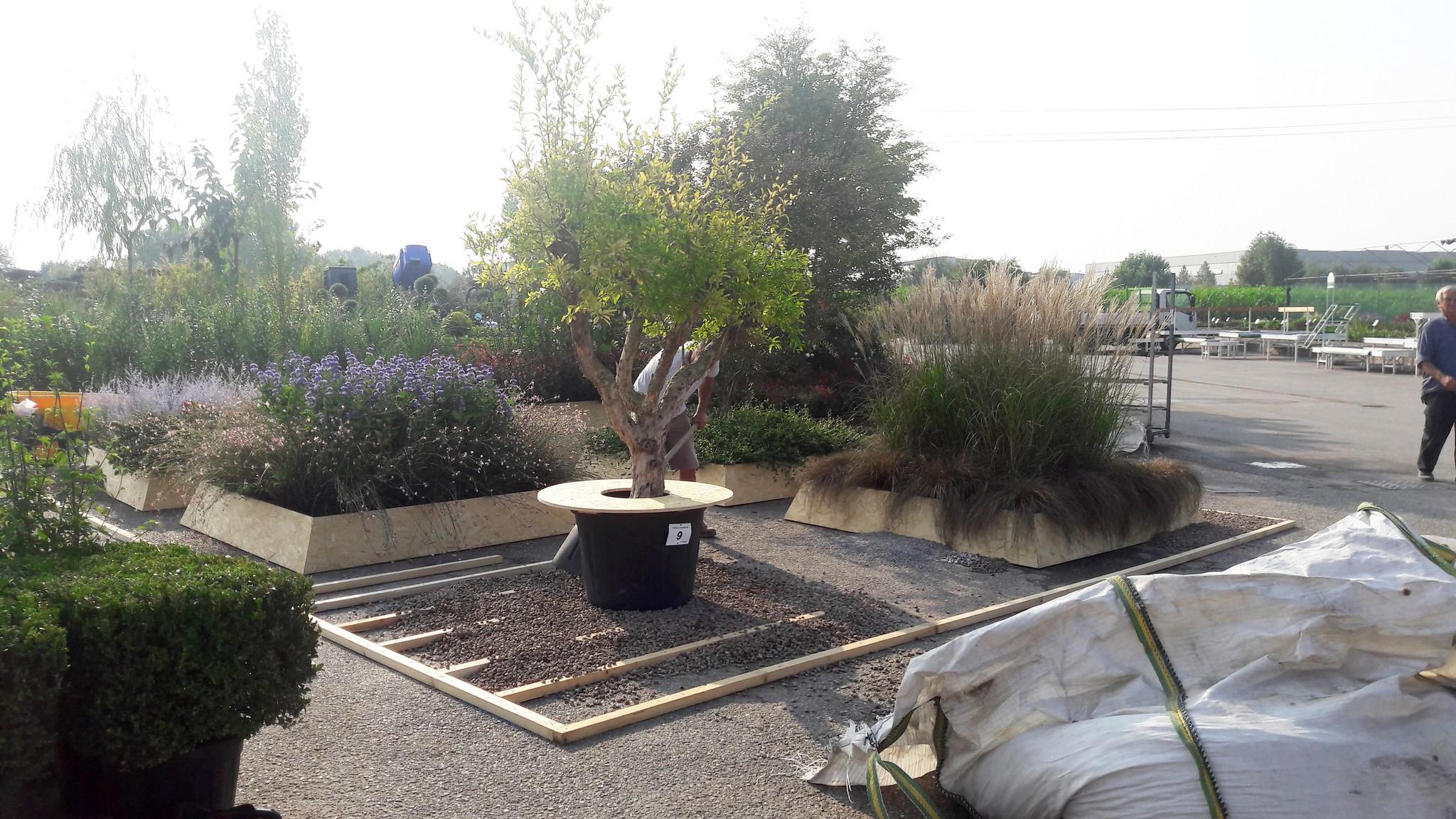 Concorso giardini Verdeggiando_32 Ode al giorno felice (ON78V) Ida Lia Russo