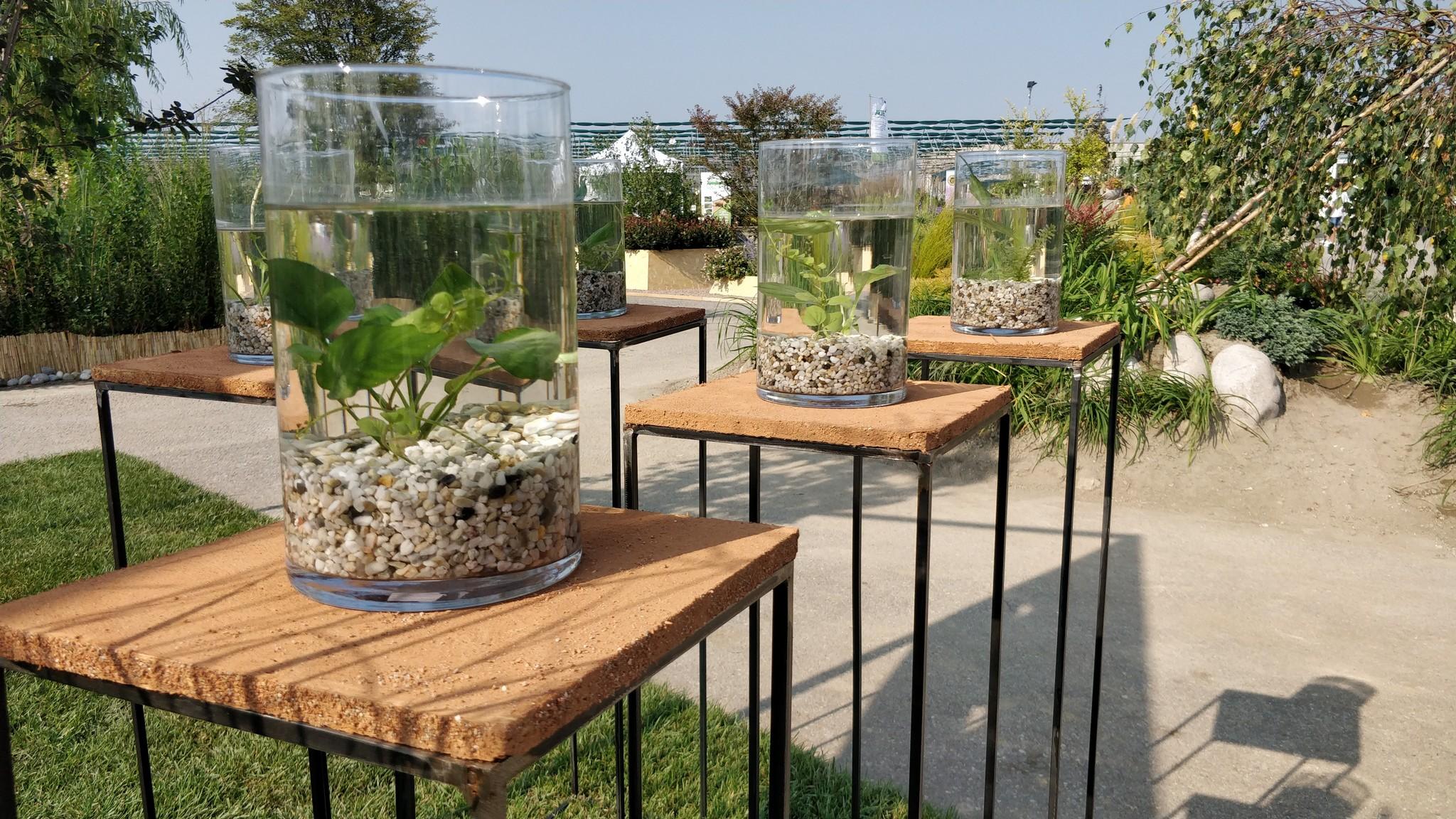 Concorso giardini Verdeggiando_65 Il valore del verde (BP277) Barbara Ponti