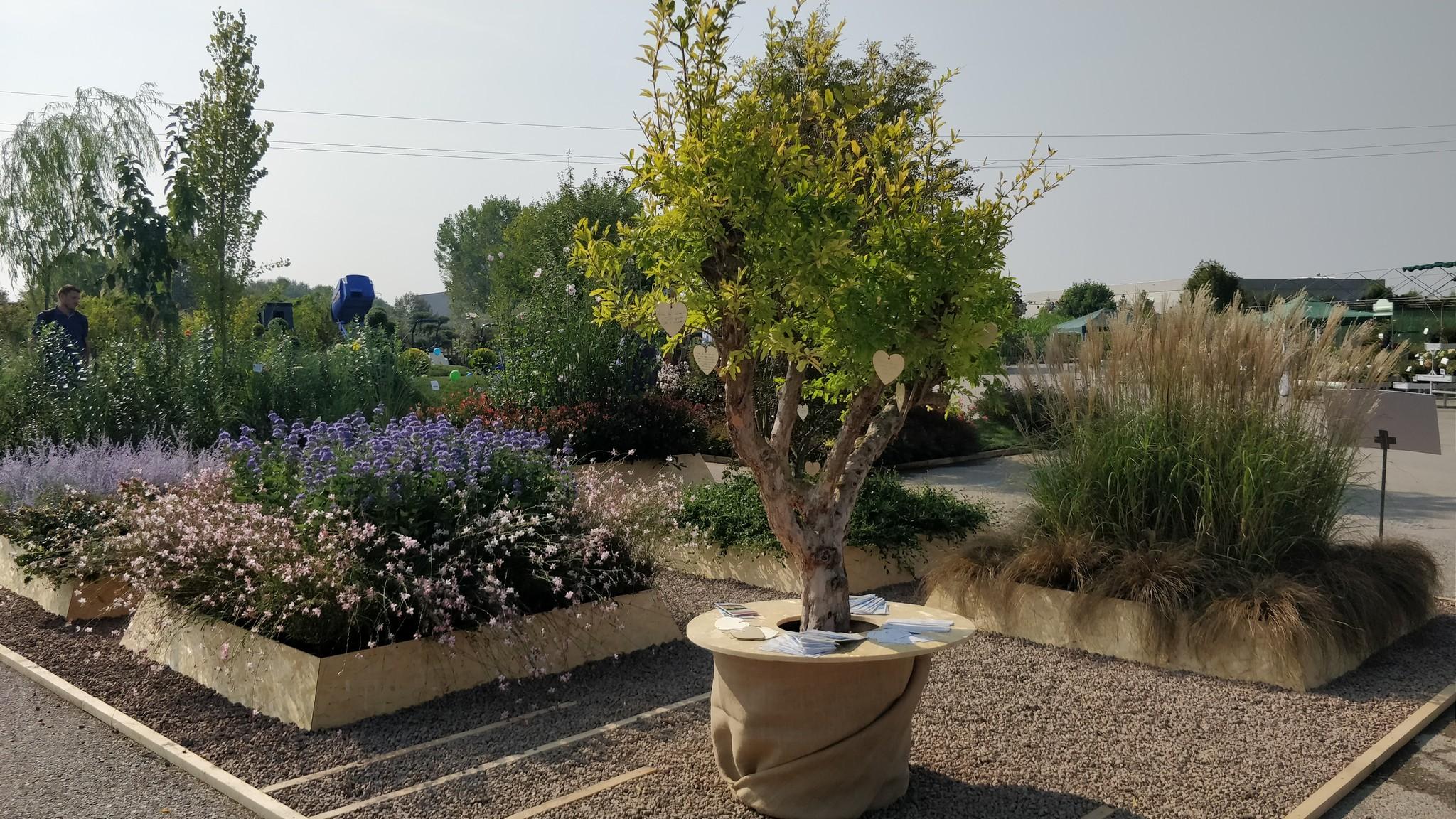 Concorso giardini Verdeggiando_69 Ode al giorno felice (ON78V) Ida Lia Russo