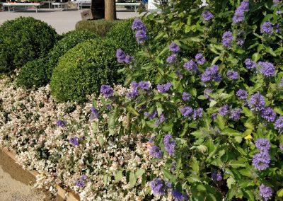 Concorso giardini Verdeggiando_71