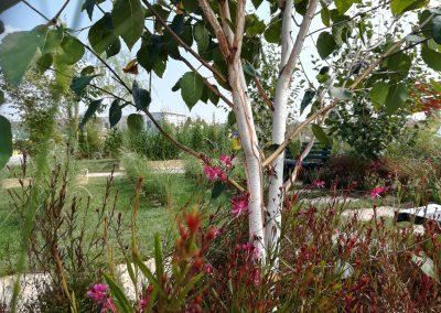 Concorso-giardini-Verdeggiando_76-Con-il-vento-tra-i-capelli-SNFT9-Stefano-Notari