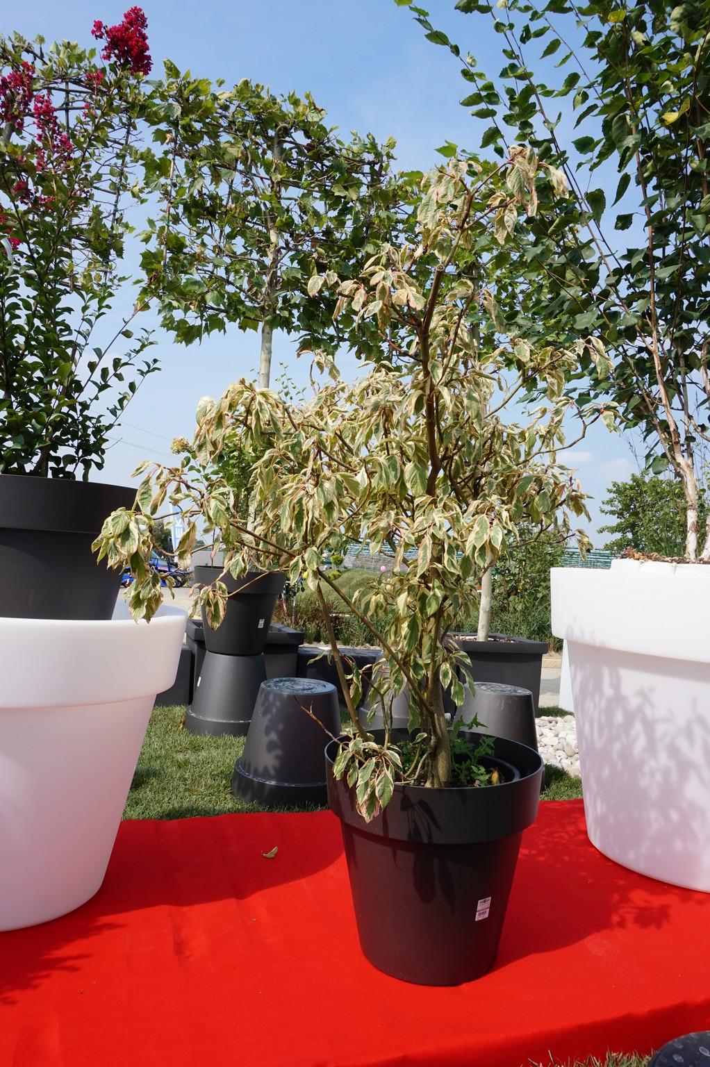 Concorso giardini Verdeggiando_90 Fashion Green Parade (7GKW3) DM Landscape Marica Succi e Domenico Dipinto