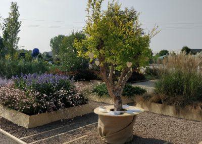 Verdeggiando 2018 Coplant_57
