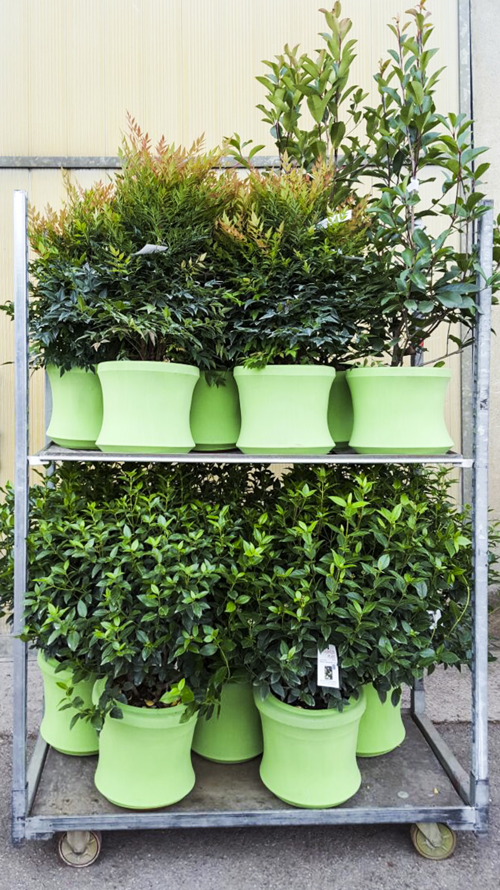 Carrello cc Fashion Plant (1)