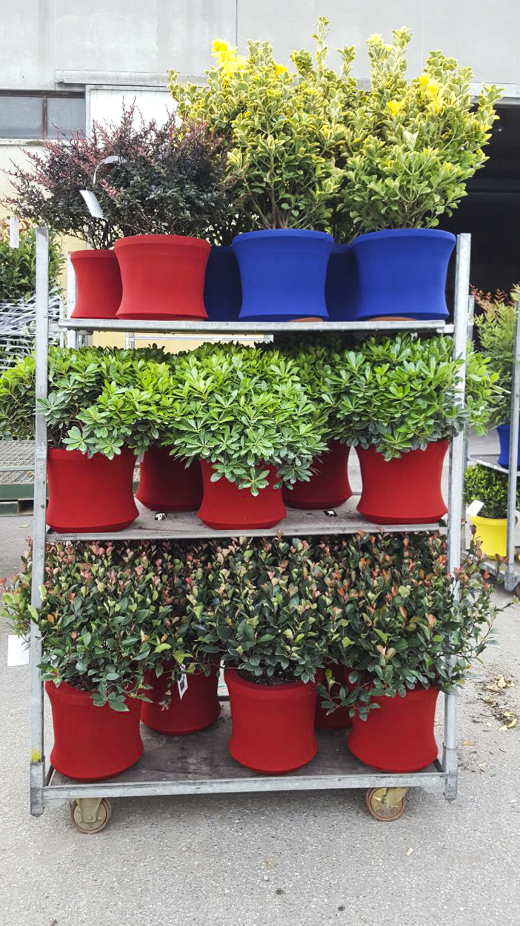Carrello cc Fashion Plant (3)